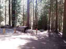 atwell-mill-campground-sequoia-national-park-15