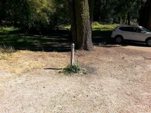 azalea-campground-sequoia-national-park-18