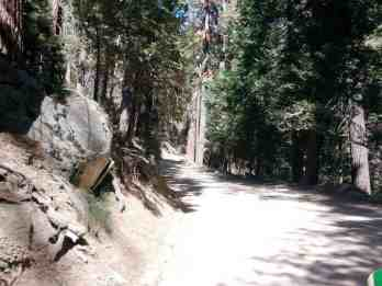 cold-springs-campground-sequoia-kings-canyon-national-park-01