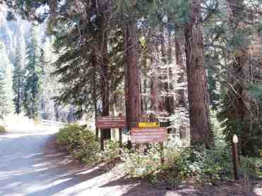 cold-springs-campground-sequoia-kings-canyon-national-park-03
