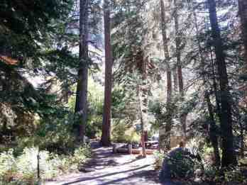 cold-springs-campground-sequoia-kings-canyon-national-park-08