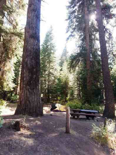 cold-springs-campground-sequoia-kings-canyon-national-park-10