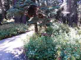 cold-springs-campground-sequoia-kings-canyon-national-park-12