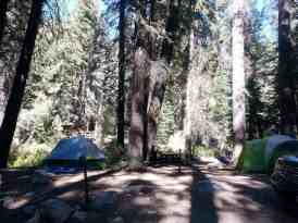 cold-springs-campground-sequoia-kings-canyon-national-park-13