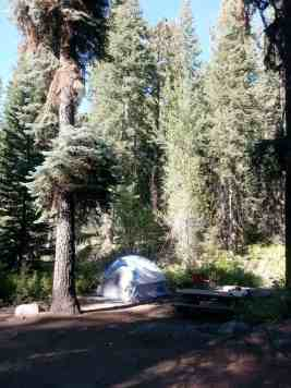 cold-springs-campground-sequoia-kings-canyon-national-park-14