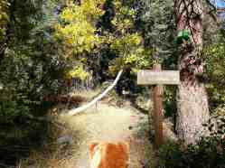 cold-springs-campground-sequoia-kings-canyon-national-park-20