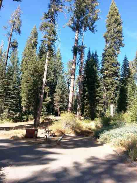 dorst-creek-campground-sequoia-kings-canyon-national-park-13