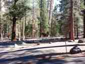 sheep-creek-campground-sequoia-kings-canyon-national-park-02
