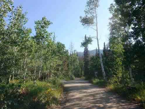 bountiful-peak-campground-wasatch-national-forest-02