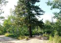 bountiful-peak-campground-wasatch-national-forest-13