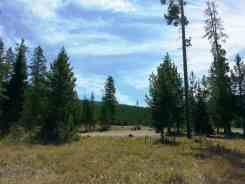 sheffield-campground-teton-forest-04