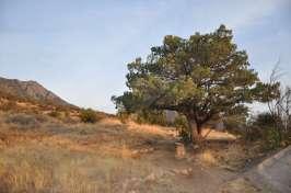 aquirre-spring-campground-las-cruces-1