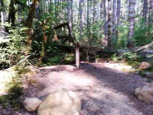 big-creek-campground-hoodsport-wa-04