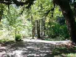 collins-campground-brinnon-wa-04