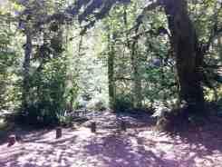 collins-campground-brinnon-wa-09