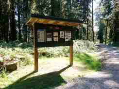 cottonwood-campground-washington-dnr-hoh-2