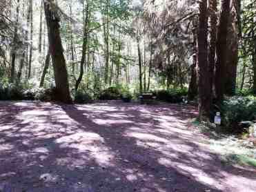 cottonwood-campground-washington-dnr-hoh-4