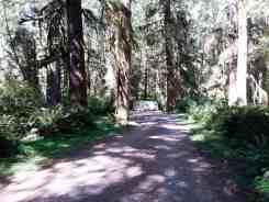 cottonwood-campground-washington-dnr-hoh-5