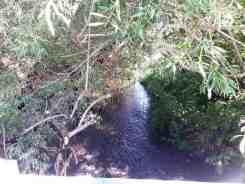dragoon-creek-campground-creston-wa-16