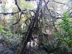 falls-creek-campground-quinault-wa-10