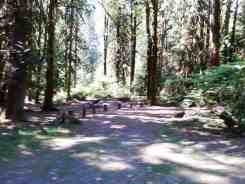 hamma-hamma-campground-wa-05