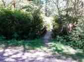 hoh-oxbow-campground-wa-3