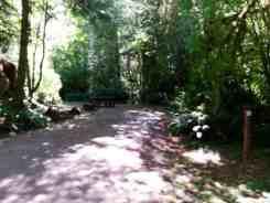 minnie-peterson-campground-forks-wa-07