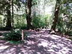 minnie-peterson-campground-forks-wa-10