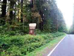 willaby-campground-quinault-wa-01