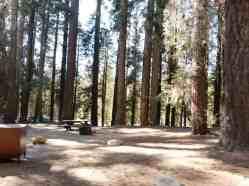 stony-creek-campground-sequoia-04