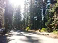 stony-creek-campground-sequoia-05