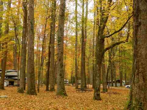 Elkmont Campground