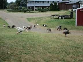 Camp Turkeyville RV Resort