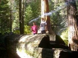 Frasier Mill Campground