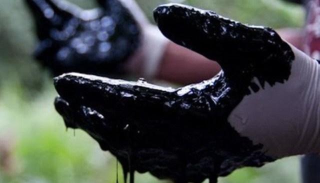 Una scuola per combattere le criminalità ambientali