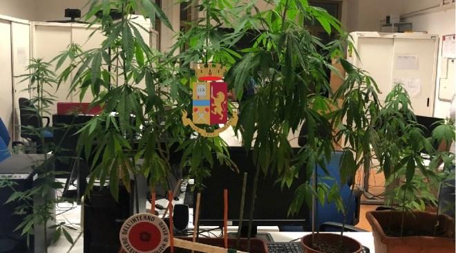Pianura, la polizia trova 6 vasi di marijuana per strada: la gente corre al bancolotto!