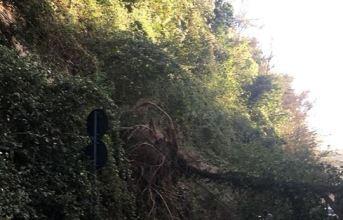 Quarto, chiusa via Pisani per la messa in sicurezza di alberi pericolanti