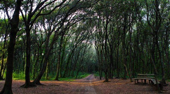 """La Foresta di Cuma tra i siti nell'indagine """"Park Litter"""" di Legambiente"""