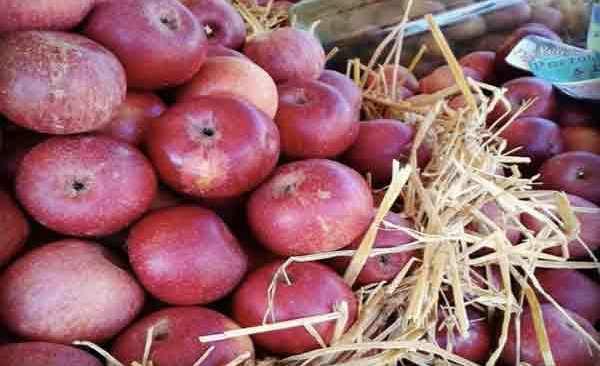 """Quarto, lunedì la seconda edizione della """"Festa della mela annurca"""""""