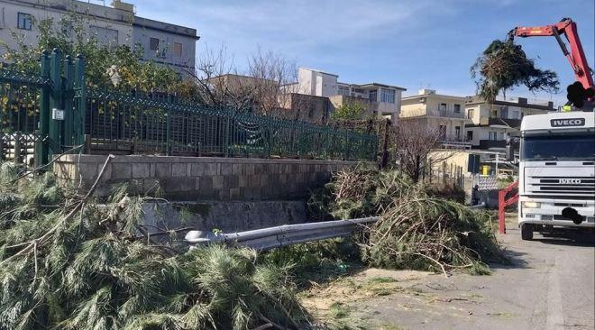 """MONTE DI PROCIDA/ """"50 pini pericolanti da abbattere, via Panoramica resta chiusa"""""""