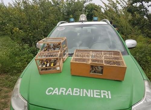 QUARTO/ Scoperta centrale di animali protetti: 140 cardellini con 72 di dubbia provenienza