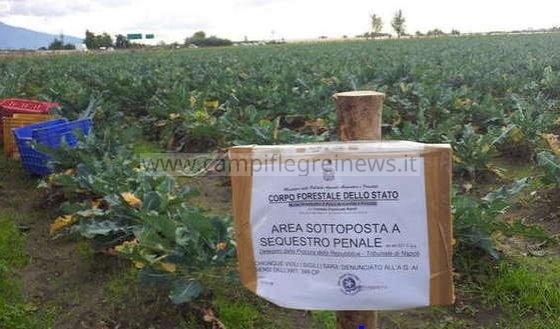 POZZUOLI/ Terreno con ortaggi contaminati da rame, sequestro e divieto di vendita
