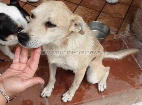 BACOLI/ Cane finisce in un dirupo salvato dai Vigili del Fuoco