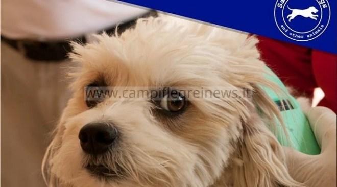Microchip gratuiti questo sabato a Licola Mare per i cani padronali, iniziativa dell'Asl Napoli 2 Nord