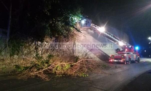 Due alberi caduti a Monterusciello e Cuma, rami invadono carreggiata alla Solfatara intervenuti i pompieri
