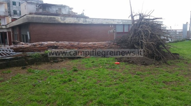 POZZUOLI/ Crolla albero in via Terracciano, servizio di Guardia Medica costretto a spostarsi