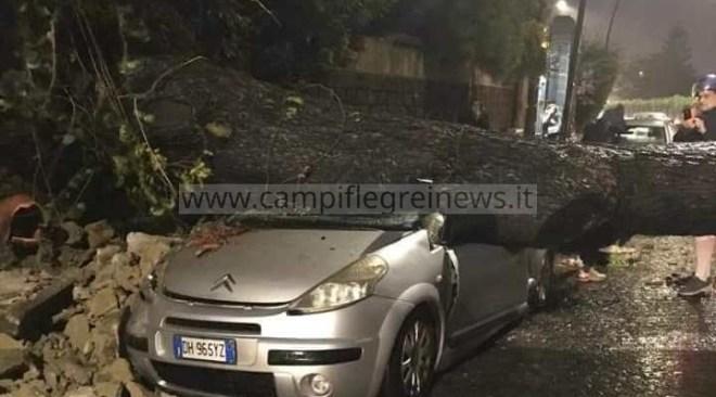 Posillipo, abbattuti dal vento molti pini: distrutte due auto - LE FOTO