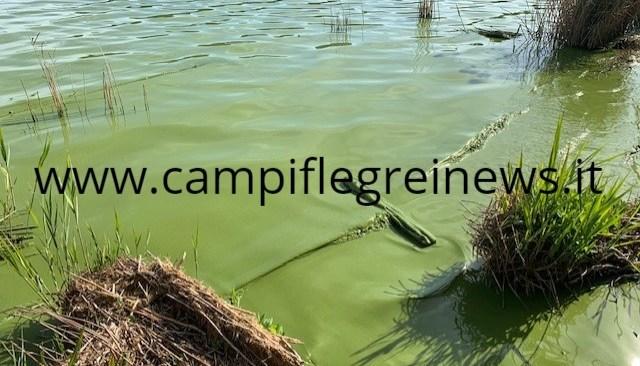POZZUOLI/ Averno, acque di nuovo verdi: nuova emergenza nel lago - LE FOTO