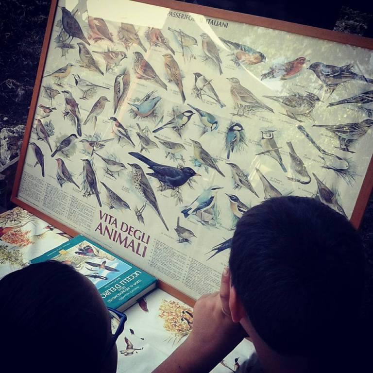 Campi Natura - Lazio - Imparare a riconoscere gli uccelli