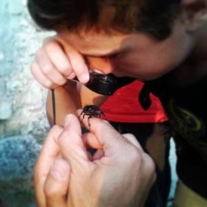 insetto ai Campi Natura - Lazio - Campi Estivi - insetto